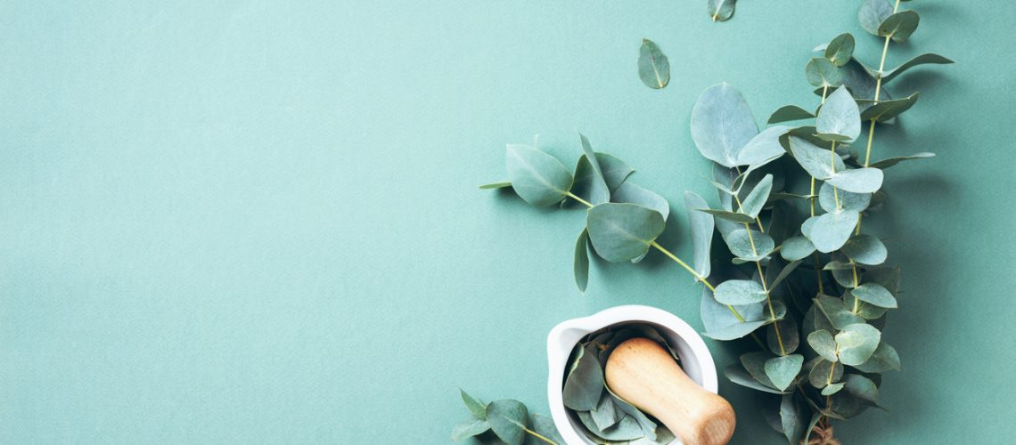 Eucalyptus leaves and white mortar, pestle. Ingredients for alternative medicine and natural cosmetics. Beauty, spa concept